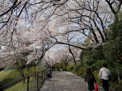 2011-4-komakiyama-3.jpg