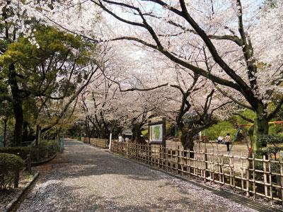2011-4-komakiyama-4.jpg
