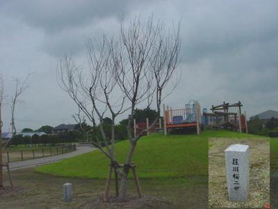syoukawa.jpg